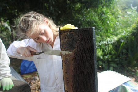 Photo of a woman harvesting honey.