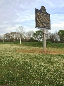 Photo of clover in bloom at the Old Rotation.