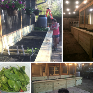 Photo collage of raised garden beds.