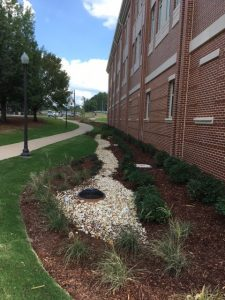 A bio-retention cell outside the new nursing building on South Donahue.