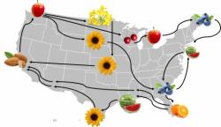 Honey Bee Colony Migratory Routes