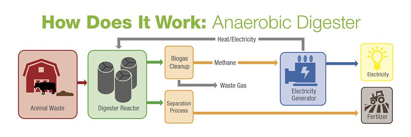 Diagram of how an anaerobic digester works.