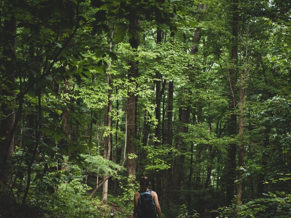 Photo of a person walking through a temperate forest.