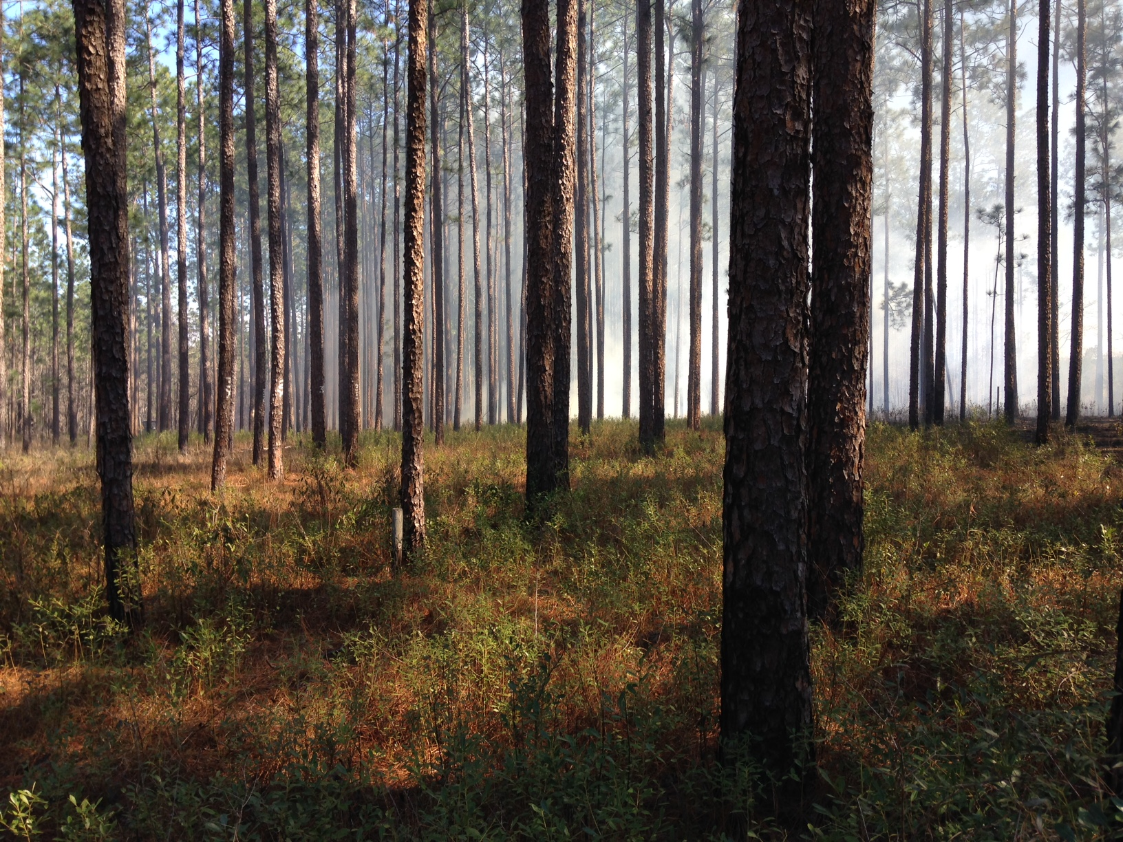 Photo of a pine forest ecosystem.