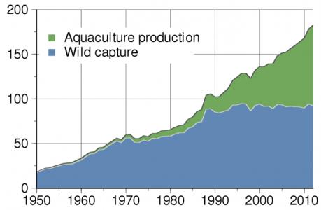 graph showing increased fish harvesting through aquaculture