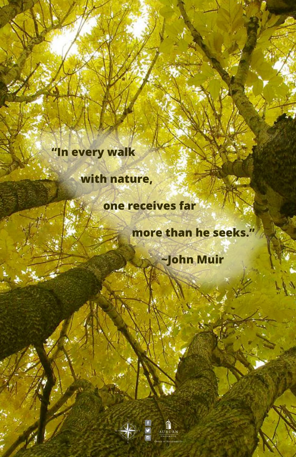 """Graphic with John Muir quote: """"In every walk with nature, one receives far more than he seeks."""""""