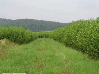 Image of lush green grass